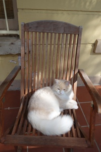 Our cat sitting on an wooden outdoor chair